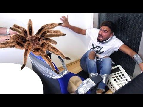 SPINNEN PRANK (SPIDER PRANK EXTREME) |  FaxxenTV