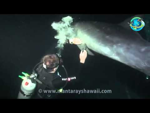 "Wild Dolphin ""Asks"" Divers to Help Free Itself from Hook"