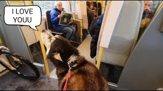 Dog Embarrasses owner daily by Talking to strangers | The Cafe part was Hilarious!