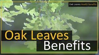 Oak Leaves Health Benefits