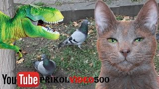 Bird annoying cat (troll dove)