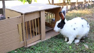 How to Make Rabbit Trap Cage or Machine at Home | Bird Trap Technology