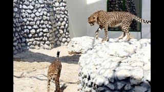Al Areen Wild Life Park Bahrain wildlife