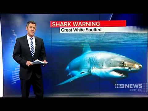 Shark Warning | 9 News Perth