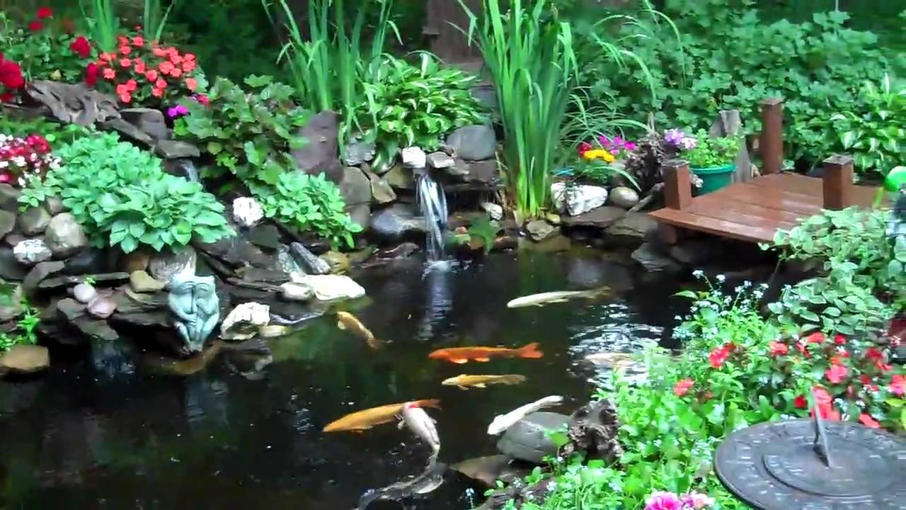 Koi pond after the rain june 1 2010 youtube for Whats a koi pond