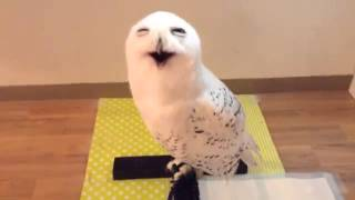 Everytime I visit this owl it gives me this face