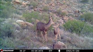 One Minute Trail Cam Moments 2