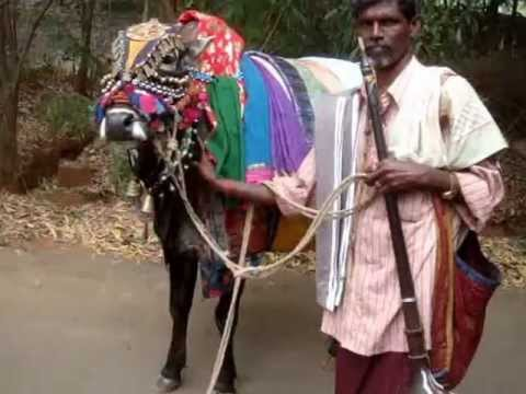 Livelihoods-The 'basava' people - Travelling peoples of India-