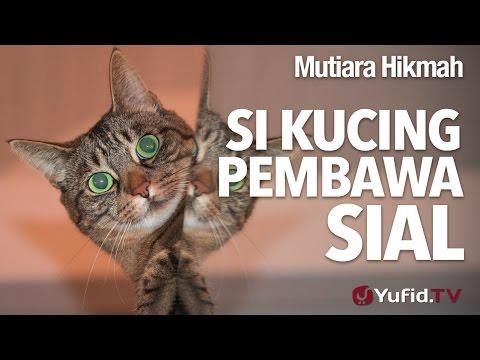 Mutiara Hikmah: Si Kucing Pembawa Sial - Ustadz Ahmad Zainuddin, Lc.