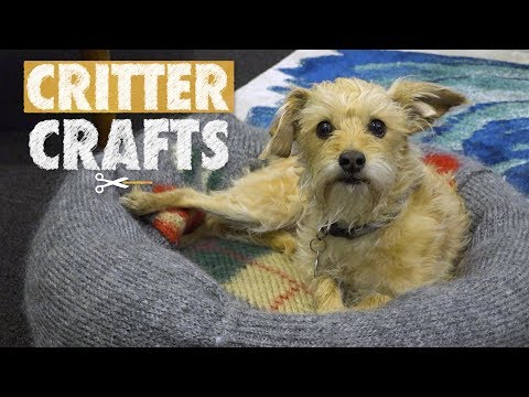 DIY Pet Sweater Beds | Critter Crafts
