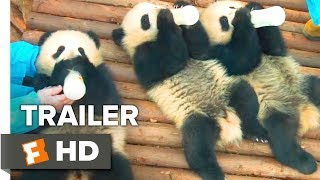Pandas Trailer #1 (2018)   Movieclips Indie