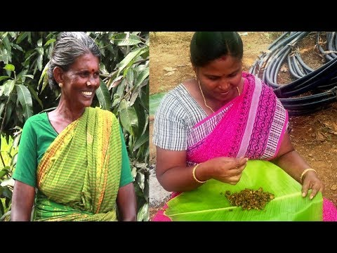 My village food Kudal Varuval Recipe in Tamil   Gramathu samayal boti varuval   Samayal kurippu