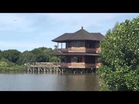 Wisata Alam Hutan Mangrove - Angke Kapuk Jakarta (Podomoro University)