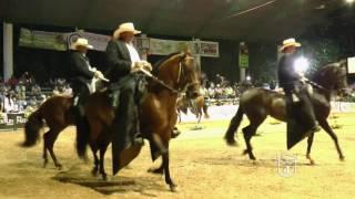 SAMARITANO DE 3A, Trote y galope IX COPA DE LOS SANTANDERES CUCUTA GRADO A 2016