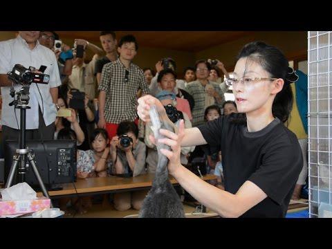 宇治川のウミウのひな、一般公開始まる 京都