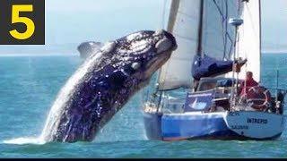 Top 5 Whale VS Boat Videos