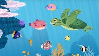 Kids Education App  Ocean Animals     for kid