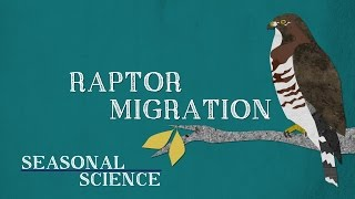 Raptor Migration | Seasonal Science | UNC-TV