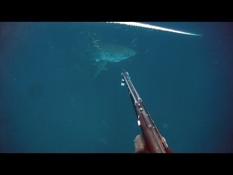 Great White Shark Sneaks Up On Diver in Gulf of Mexico