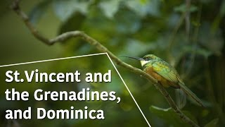 St.Vincent and the Grenadines, and Dominica - Caribbean Moments - The Secrets of Nature