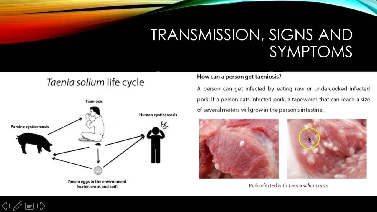 Taenia solium life cycle