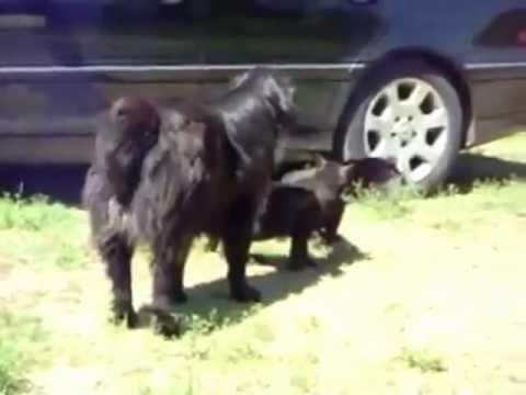 Cães separam briga de gatos!