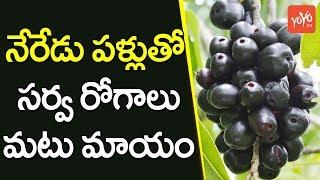 నేరేడు పళ్లు తో సర్వ రోగాలు మటు మాయం | Health Benefits of Eating Black Plum | YOYO TV CHANNEL