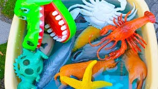 Learn Colors With Animal Names Learn Wild Zoo Animal Toys For Kids