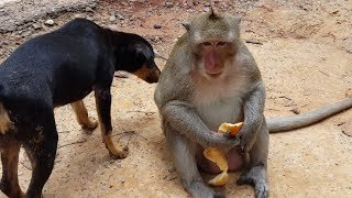 Happy monkey play with lovely dog, animal planet