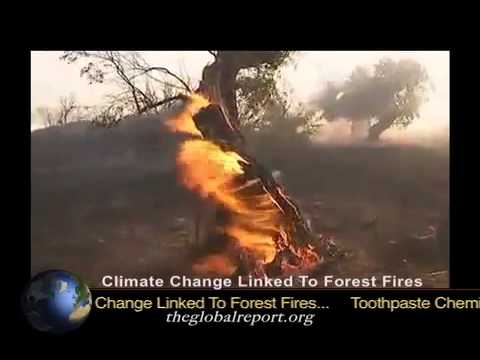 Climate Change Linked To Forest Fires