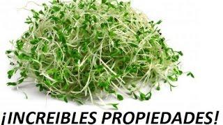 Las increíbles propiedades de la alfalfa.