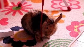 Rabbit - playful