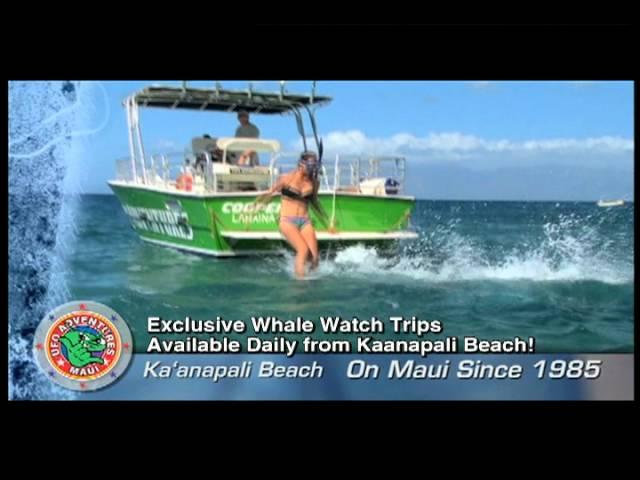 UFO 2011 Whalewatch.MOV