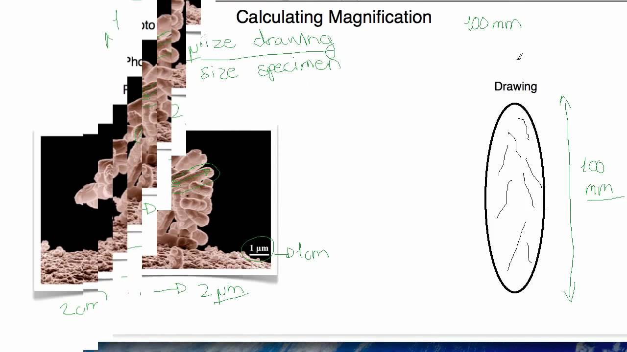 ib biology 2 1 5 calculating magnification youtube. Black Bedroom Furniture Sets. Home Design Ideas