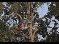 Arborists offer day of service to honor veterans thumbnail