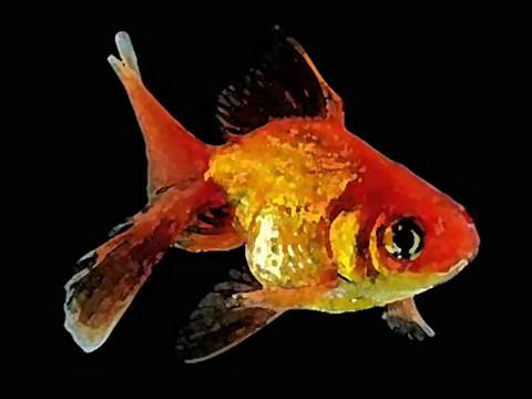 Олег Медведев - Маленькая Рыбка
