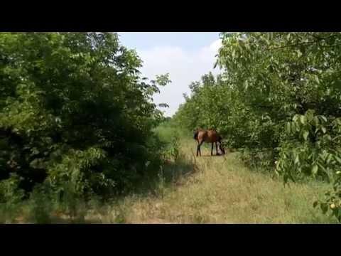 9 летний ореховый сад