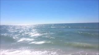 Dolphin on Marco Island, Florida