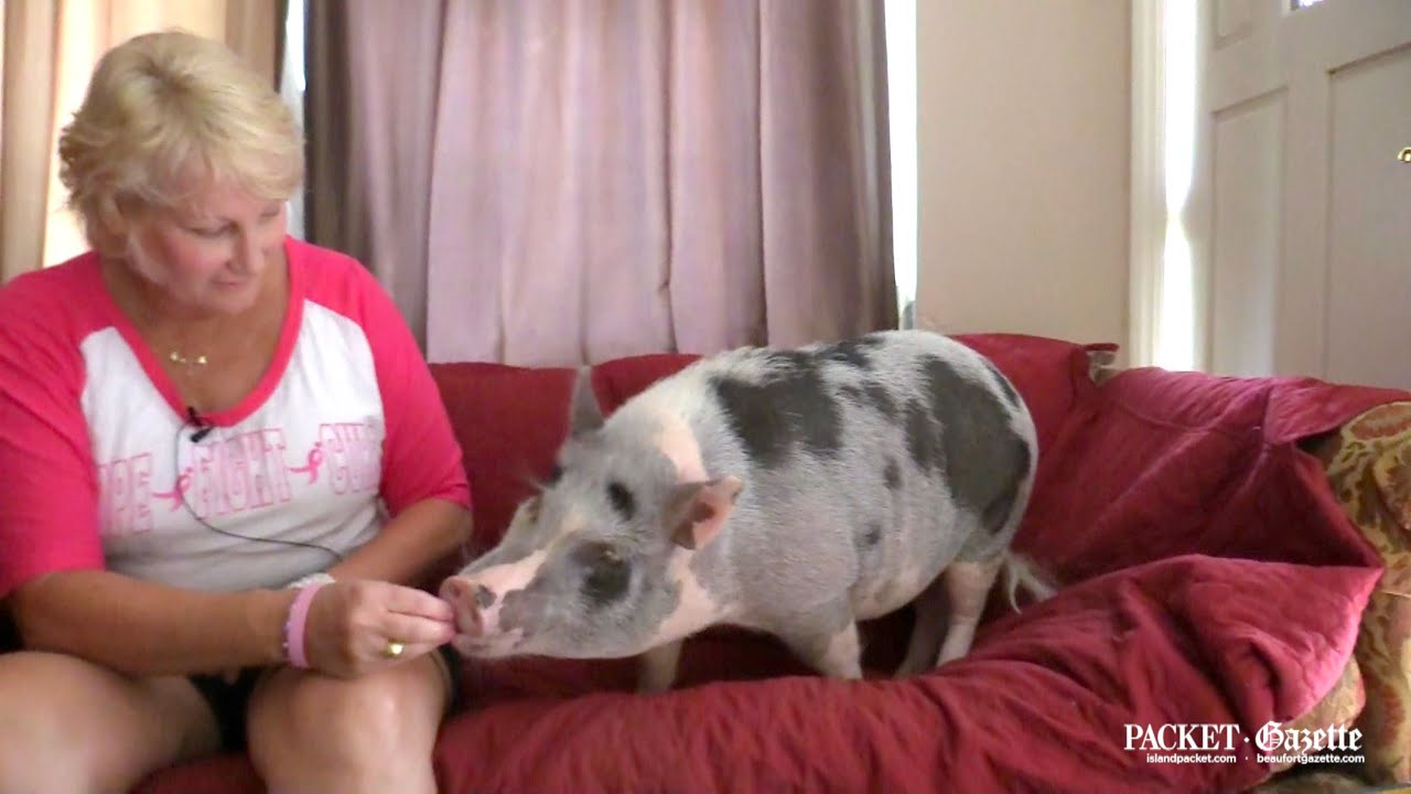 Pig woman sx vГdeo donlod porn scenes