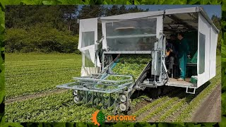 Transplanted rocket - Rucola trapiantata : harvesting through Ortomec machine