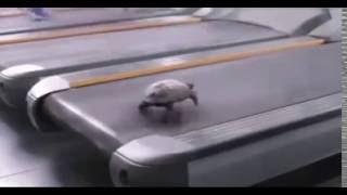 Turtle | It can run FAST.