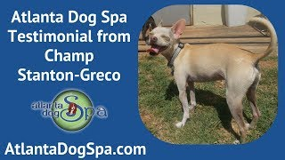 Atlanta Dog Spa Testimonial  - Champ