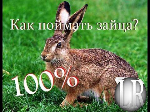 как можно ловить зайцев