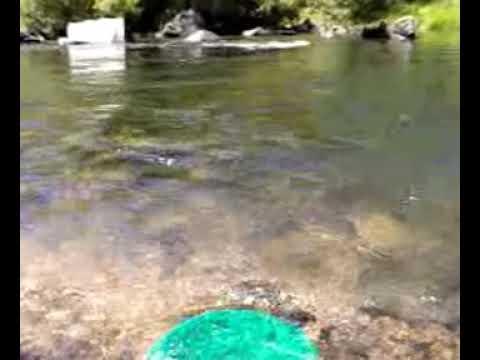 Como extraer oro de los rios