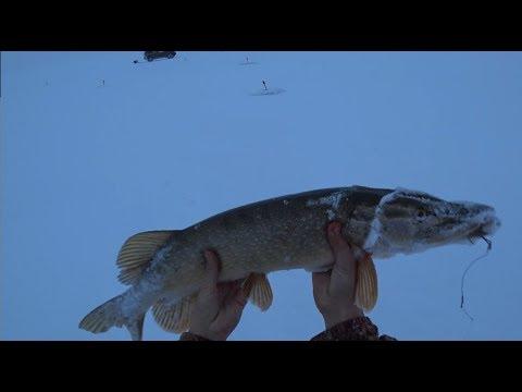 рыбалка в октябре на амуре