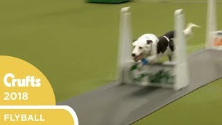 Flyball - YKC Final | Crufts 2018