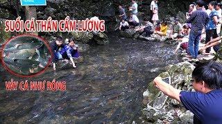 Suối Cá Thần Cẩm Lương Bí Ẩn Tự Nhiên Chưa Có Lời Giải Ở Việt Nam