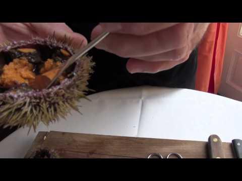 Technique de cuisine : ouvrir un oursin