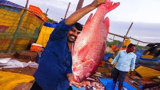 Live Red Snapper Fish Cutting | Fisherman