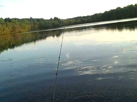 Frog fishing for largemouth bass with hat cam Video